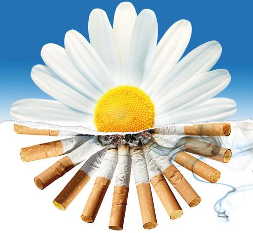 Сегодня всемирный день отказа от курения.